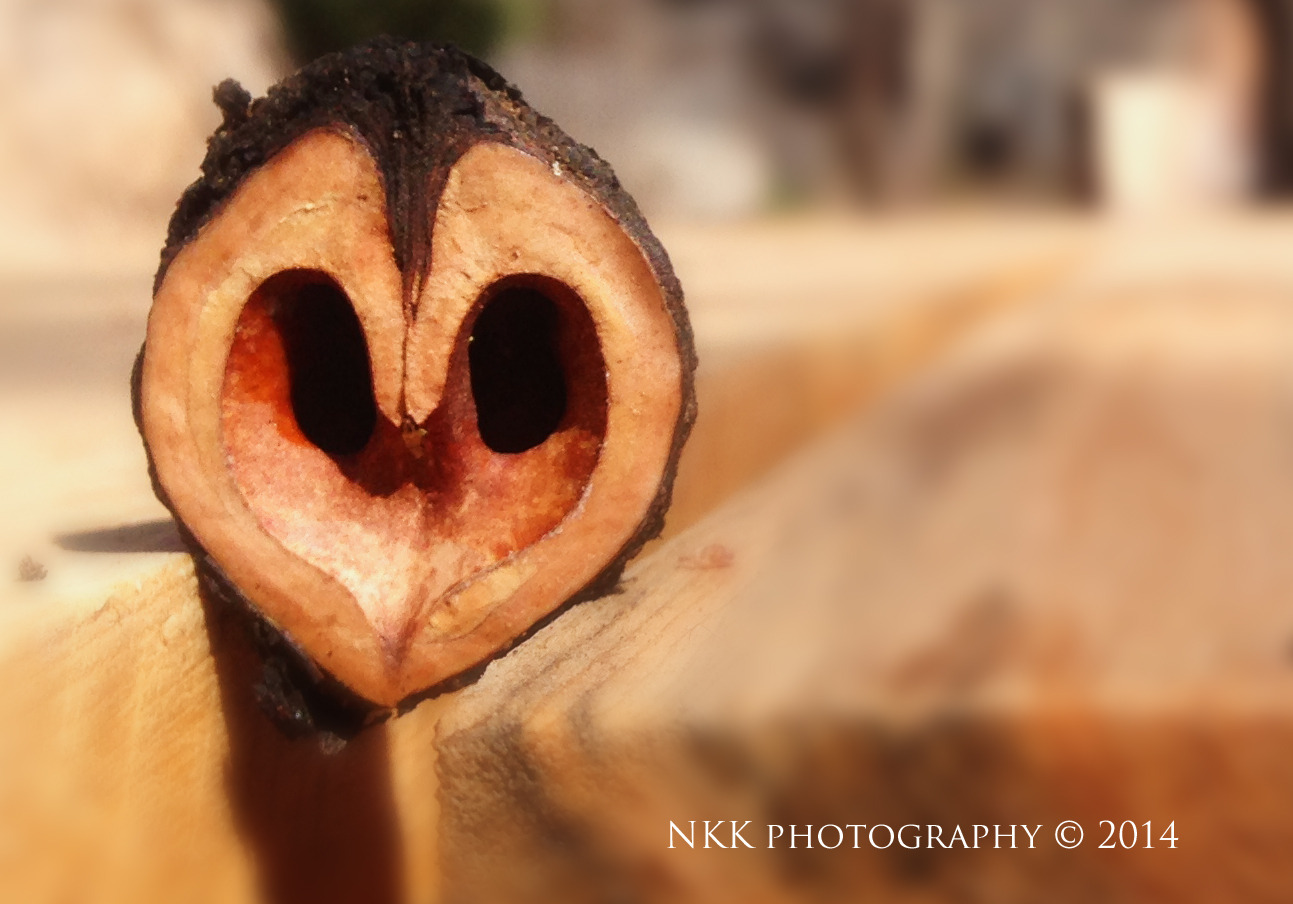 NKKnutty-heart-copyright-edited-1.jpg
